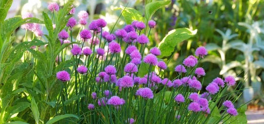 gardening-uk-98