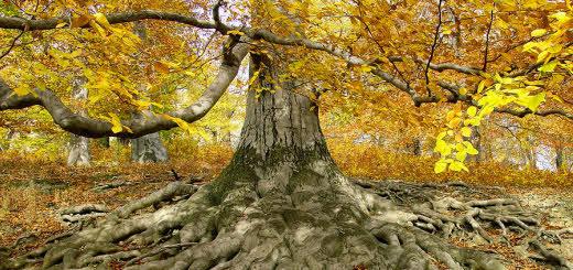 arboriculture-course