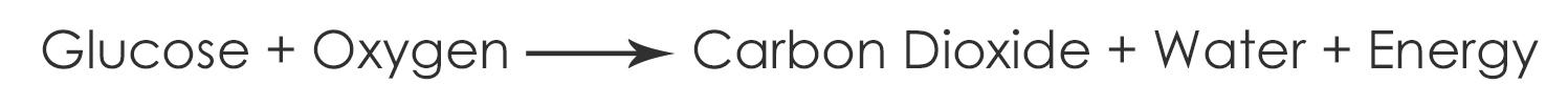 Equation-for-Aerobic-Respiration
