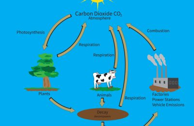 RHS Level 3 Question – Carbon Cycle