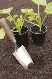 check-your-soil