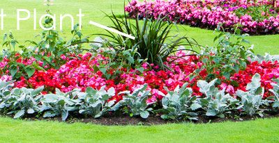 Edging', 'Groundwork', and 'Dot' Plants
