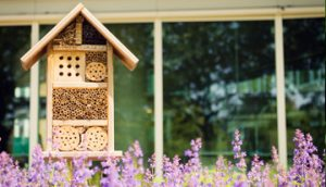 insect-house