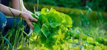 RHS Level 2 – Outdoor Food Production