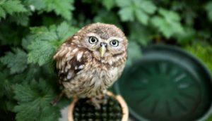 wildlifegardening-small